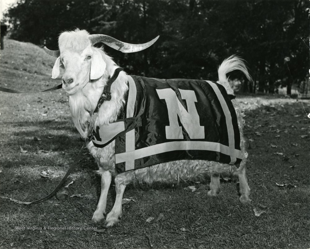 Navy Goat Mascot - West Virginia History OnView | WVU Libraries