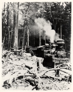 Shay No. 5 on tracks in the forest. Cheat Mountain; Cass, W.V.