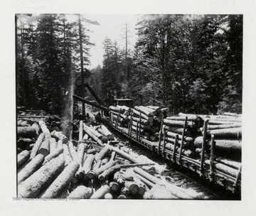 Picture of Logs being loaded onto a train cargo cart.