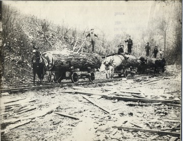 Horses pull cars with large sections of logs along tracks.  Loggers pose on logs.