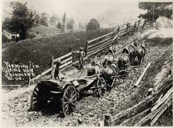 Team of six horses pulling a wagon through mud. Oil derricks in the background.