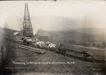 Team of six horses pulling pipes up a hill.