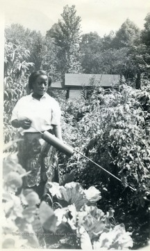 Woman spraying a garden for insect control in Kanawha County.