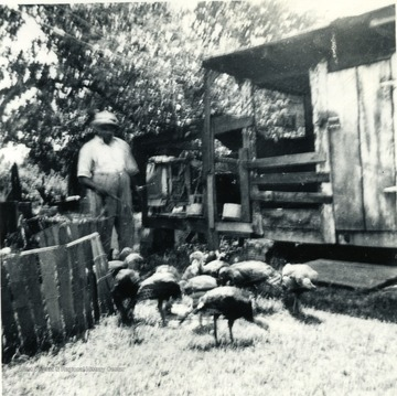 Man and turkeys, part of the Homemaker Turkey Project in Kanawha County. Money made from this project was used to purchase a new kitchen sink.