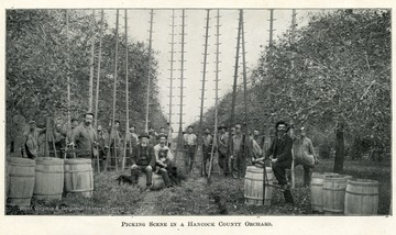 A group of men congregated around barrels holding their apple picking ladders.