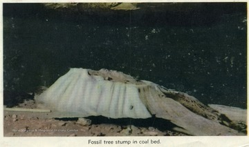A clipping from the back of a map, showing a fossilized tree stump in a coal bed.