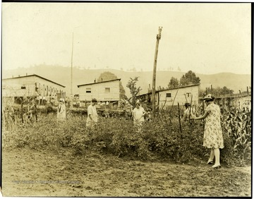 During Unionization of Coal Company workers, miners' families were evicted from Company owned houses.  The Union supplied building material and land and the miners plus others constructed temporary barracks until the labor trouble was settled. Beside the barracks, there was room for small garden plots and here they are shown working in them. See New York Times Sunday Sept. 5th Picture Section.