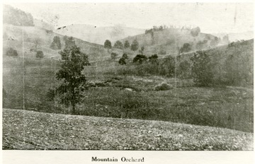 Orchard on top of a mountain near the W. Va. Industrial School for Boys, Grafton, W. Va.