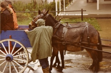 Two horses stand behind a wagon in the Monongalia County Bicentennial Parade. Water is seen on the road. Man wearing a poncho indicating rain.
