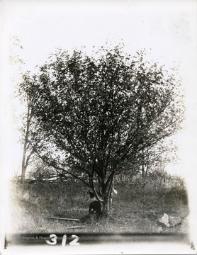 Lucy Johnston, sister of J.L. Johnston, is sitting underneath a tree in Morgantown, West Virginia.
