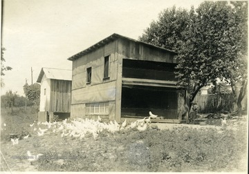 'Poultry house of Mr. C. D. Rice, R.F.D. 1, Ravenwood. A two-storied poultry house, 12' x 24' that is worthy of being used as a model by others in Jackson County desiring this type of house. One hundred fifty fowls are kept in this house.Total income, 1913, $259.25.' From photo album labeled 'Stewart A. Cody, County Agent, Jackson County, 1912.'