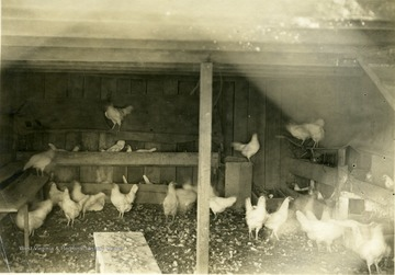 'Interior of first floor of Mr. C. D. Rice's poultry house. The birds are fed on this floor in the winter. The nests are also on this floor while the perches are on the second floor.' From photo album labeled 'Stewart A. Cody, County Agent, Jackson County, 1912.'