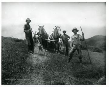 Four farmers and two horses are raking hay in a field in Lewis County, West Virginia.