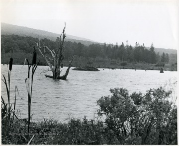 View of water with trees and brush at Canaan Valley.