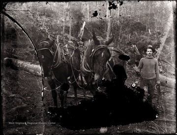 A portrait of loggers and two work horses in Helvetia, W. Va.