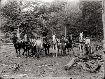 A portrait of loggers and work horses stand in the cleared field.