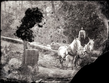 Two loggers on the felled trees near the horses await.