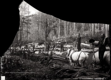 A view of logging site loggers, felled trees and a horse.