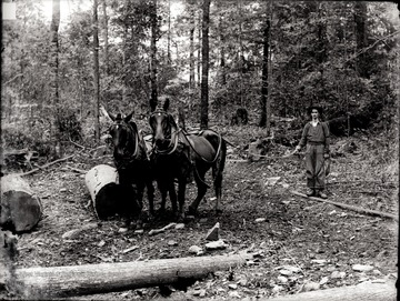 A portrait of man and two horses at the work site.