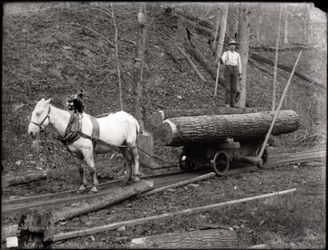 A view of work horse strapped to a loaded car on rails; a logger stands on the load.