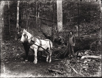 A view of two work horses and man at the work site in Helvetia, W. Va.