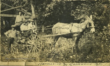 Bucky the mule, hitched to a wagon, pulls four unidentified people.