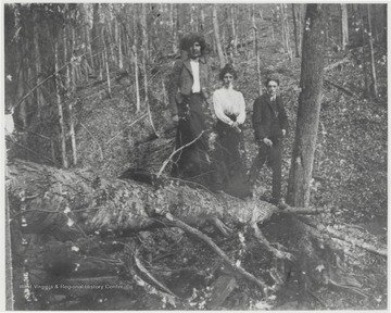 The three are pictured balancing on top of a fallen tree.