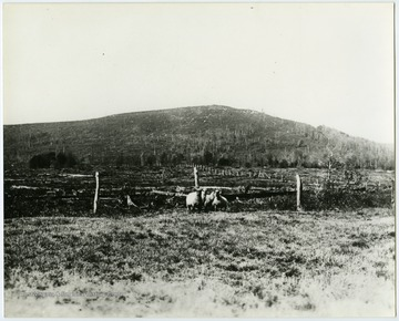 "This image is part of the Thompson Family of Canaan Valley Collection. The Thompson family played a large role in the timber industry of Tucker County during the 1800s, and later prospered in the region as farmers, business owners, and prominent members of the Canaan Valley community.""This is a picture of Canaan Mountain taken near where the country store and Mountain View Motel is now located and shows how bare the mountain was after the timber was cut and it had been burned by fires. This picture was taken about 1910."""