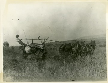 This image is part of the Thompson Family of Canaan Valley Collection. The Thompson family played a large role in the timber industry of Tucker County during the 1800s, and later prospered in the region as farmers, business owners, and prominent members of the Canaan Valley community.A farmer and his horses working in a field likely in Canaan Valley.
