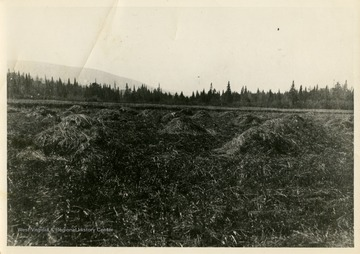 "This image is part of the Thompson Family of Canaan Valley Collection. The Thompson family played a large role in the timber industry of Tucker County during the 1800s, and later prospered in the region as farmers, business owners, and prominent members of the Canaan Valley community.""This hay cut and raked - shucked by hand"""
