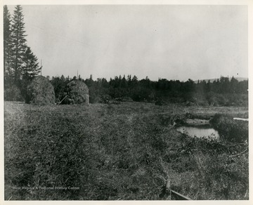 "This image is part of the Thompson Family of Canaan Valley Collection. The Thompson family played a large role in the timber industry of Tucker County during the 1800s, and later prospered in the region as farmers, business owners, and prominent members of the Canaan Valley community.""Making hay on Canaan Valley Glades close to town."""