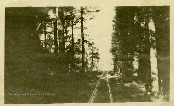 This image is part of the Thompson Family of Canaan Valley Collection. The Thompson family played a large role in the timber industry of Tucker County during the 1800s, and later prospered in the region as farmers, business owners, and prominent members of the Canaan Valley community.Scenic view of logging track in Davis, W. Va.